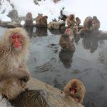 泉大津市で露天風呂とサウナのある銭湯に行くなら浜之湯温泉!