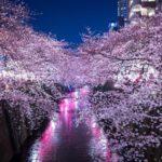 岸和田市民がおすすめする桜の名所&お花見厳選スポット!