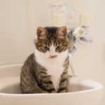 お風呂でダイエット?毎日の生活に取り入れたい痩せる入浴法!