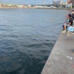 泉大津市の釣りスポットきららタウンのなぎさ公園でアジが入れ食い!